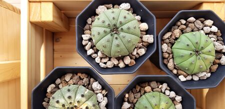 Top view of green cactus with gravel in black flower pot on wooden box for sale at tree market - Natural plant and Growth concept 写真素材