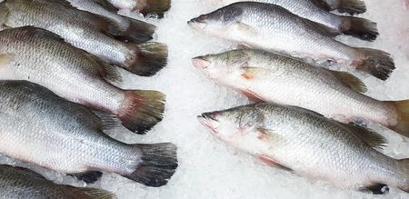 Fresh  Asian sea bass, Lattice or Barramundi fish freezing on ice for sale at seafood market or supermarket Stock fotó