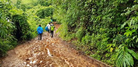 Group of hiking or traveler and backpacker people in raincoat walking on muddy and slushy pathway with among many tree in tropical jungle or forest at Chiang mai, Thailand. Adventure and Travel Zdjęcie Seryjne