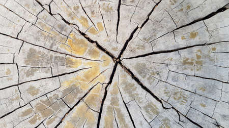 Cracked wooden background or wall. Pattern line of wood wallpaper or surface table.