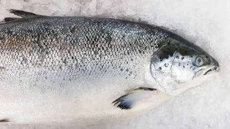 Fresh salmon freeze on ice for sale at fish market or supermarket with copy space on right. Animal, Uncooked food and Marine life.