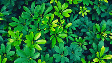 Beautiful fresh green leaves pattern for background at garden park in blue filter tone. Beauty of Nature, Growth, Plant and Natural wallpaper concept