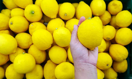 Hand of woman holding fresh lemon with other lemon on background at market or supermarket. Select and Choice for buy food concept. Freshness or Organic fruit. Food with copy space 版權商用圖片