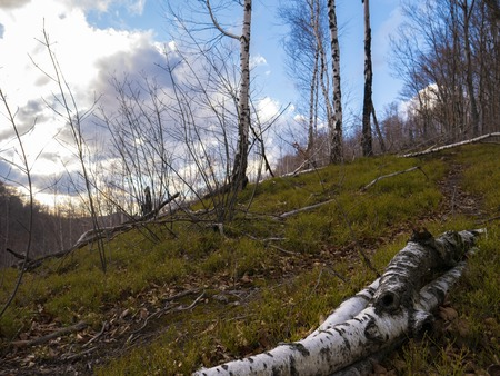 Beech forest without leaves in early spring and sunshine