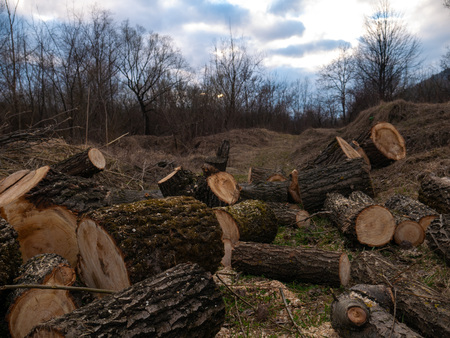 Pile of wood logs on the edge of the forest Ukraine