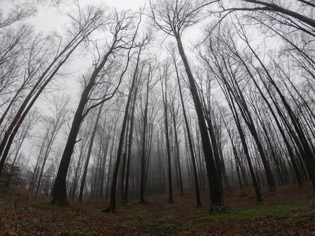 foresta di paesaggio selvaggio con alberi di pino e muschio sulle rocce