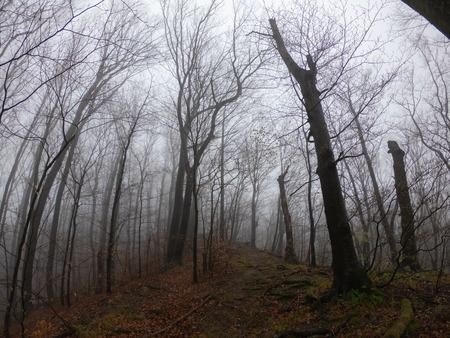 forêt de paysage sauvage avec des pins et de la mousse sur les rochers