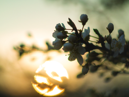 flowers in the trees at sunset and sun