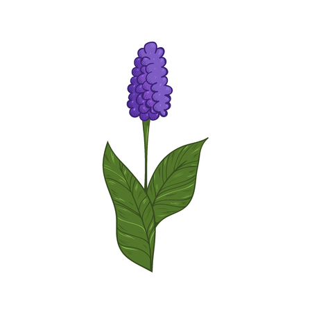 Illustration of colorful hyacinth and black and white hyacinth. Set of hand drawn inky hyacinths for coloring. Template for coloring book, stickers, prints, etc.