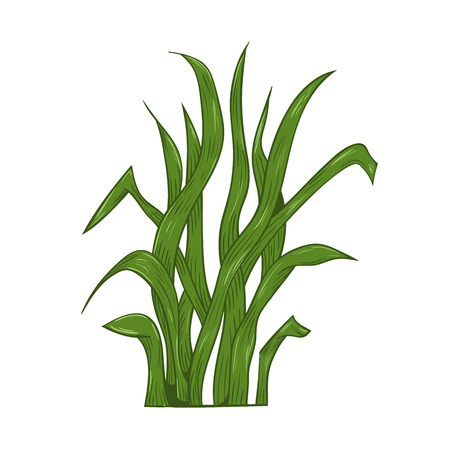 Fragment of a green grass. Vector illustration, isolated on a white. Hight detailed.