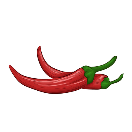 Red chili pepper isolated on white background. Vector illustration hand drawn style