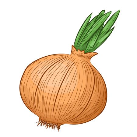 Yellow onion isolated on white background. Vector illustration hand drawn style Ilustração