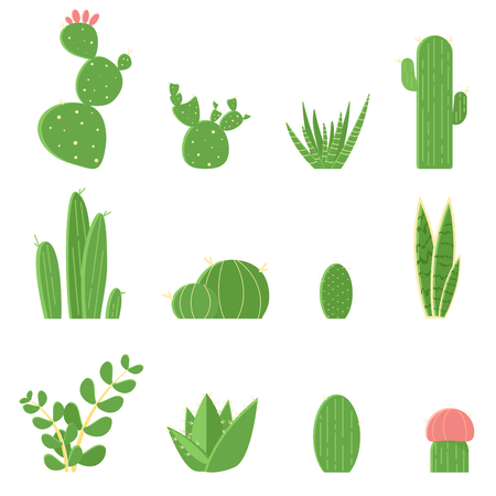 Flat vector set of cacti and succulents. Cartoon illustration of cactus isolated on white background. Illustration