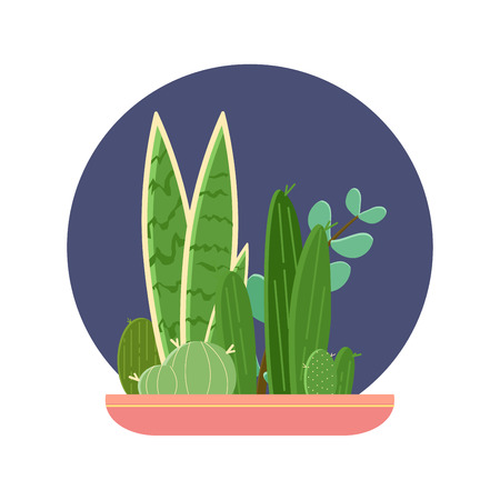 Cactus plant pot garden, modern natural home miniature green corner decoration. Flat vector illustration.