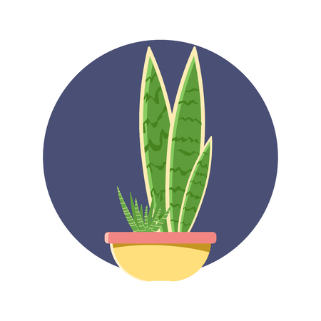 Sansevieria plant pot garden, modern natural home miniature green corner decoration. Flat vector illustration.