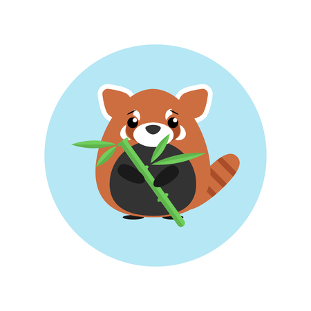Cute baby red panda standing with bamboo in paw on blue circle background.