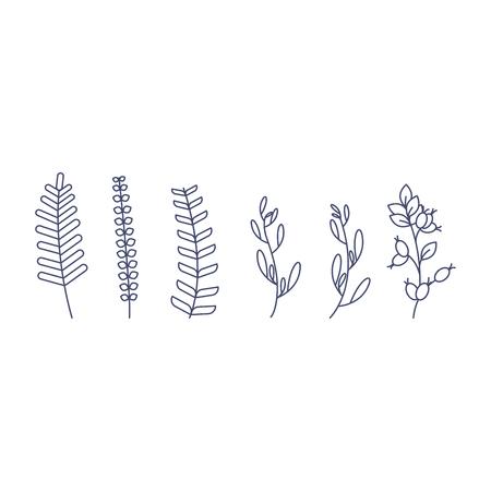 Set of different forest fern leaves vector illustration