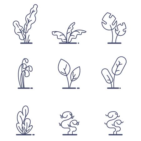 Set of different forest ferns vector illustration 向量圖像