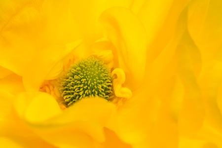 threadlike: soft flower background