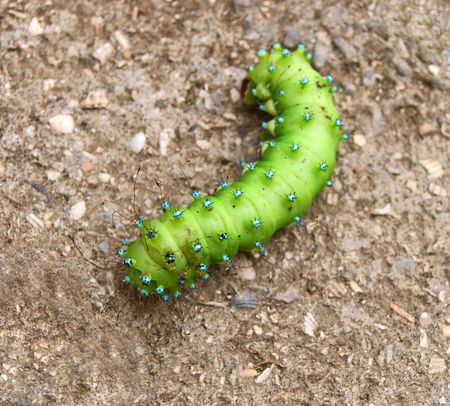 Green caterpillar on shelly background
