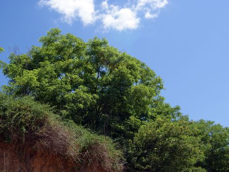 Landscape with tree and bushes on a hill under clear blue sky