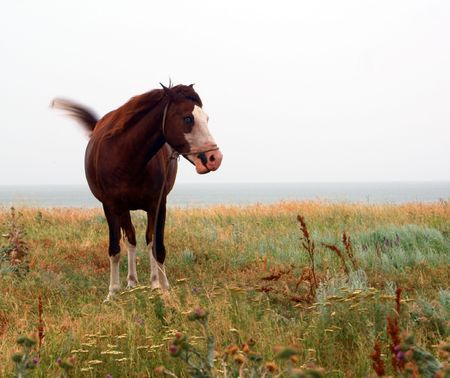 Brown horse feeding on green grasy meadow Stock Photo