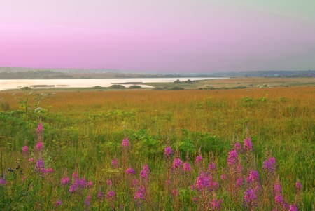 Purple sunset in the meadow