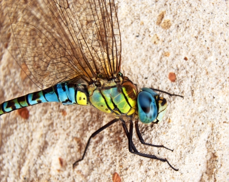 Close up of blue and yellow dragonfly on sandstone background photo