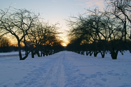 A path in a snow in winter park at sunset