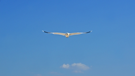 span: White seagull in clear blue sky