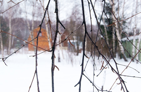 Wooden houses in the forest behind the tree in winter Stock Photo