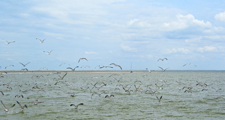 Panoramic sea view on a gulf and long sandy beach with gulls