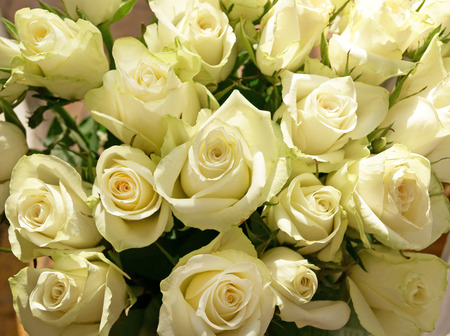 Close-up of large bunch of greenish white roses with sun light