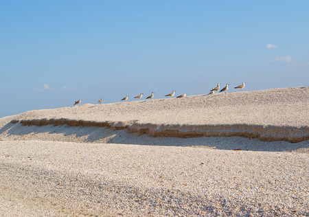 Row of seagulls on sandy hill ranking on a clear day Stock Photo