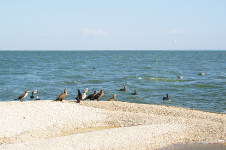 Flight of Cormorants and Seagulls resting on the island in the Azov sea Stock Photo