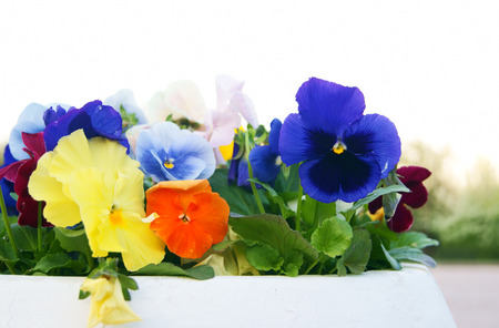 Closeup of masonry outdoor flower pot with viola pansy flowers