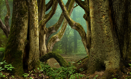 deep roots: Fantasy forest with massive mossy crooked trees