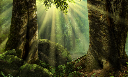 Forest landscape with sunbeams mossy trees and stones