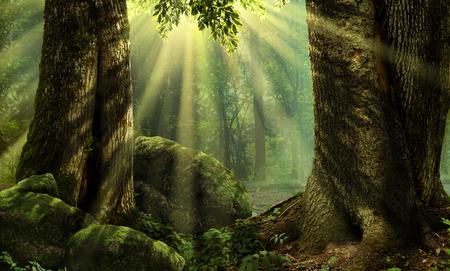 ocas: Paisaje del bosque con árboles cubiertos de musgo y piedras rayos de sol Foto de archivo