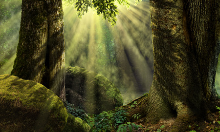 Forest landscape with old trees, sunbeams, mist, mossy rocks