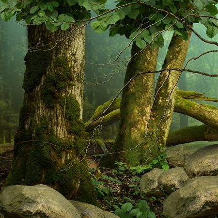 arboles frondosos: Paisaje del bosque con árboles cubiertos de musgo, neblina azul y rocas Foto de archivo