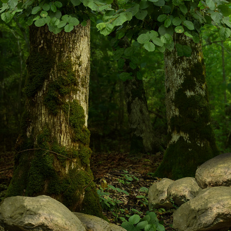 large tree: Dark green forest with mossy trees, foliage and rocks