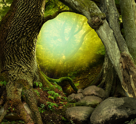 hollow tree: Forest landscape with old mossy trees, shining light and stones Stock Photo