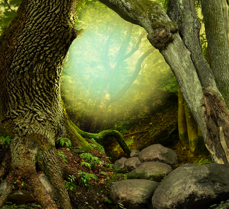 Fantasy forest with old mossy trees, shine and rocks Stok Fotoğraf