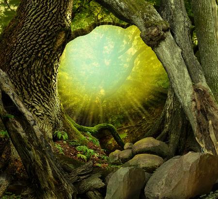 ocas: Bosque con árboles cubiertos de musgo ahuecados, luz brillante a través de oscuras, rayos de sol, las rocas