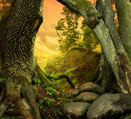 hollow tree: Landscape with old crooked trees, red sunset sky, roots and rocks Stock Photo