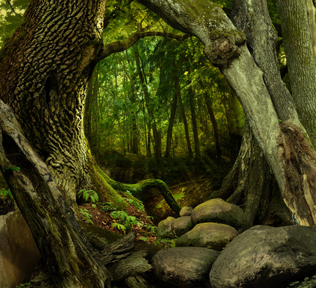 Fantasy forest with mossy hollowed crooked trees and rocks Stock Photo