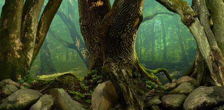 roble arbol: Panorama del paisaje de bosque con viejos árboles cubiertos de musgo y rocas