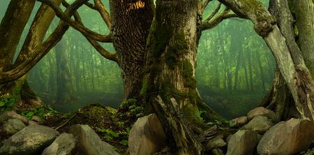 tronco: Paisaje del bosque con el viejo musgo árboles, neblina y las rocas