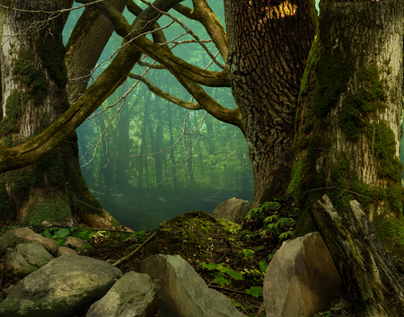 deep roots: Dark forest with old massive mossy trees, stones and crooked branches